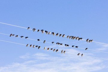 birds sitting on wire, Nevada, USA