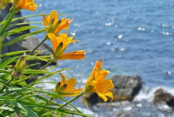 Lilies at sea 7