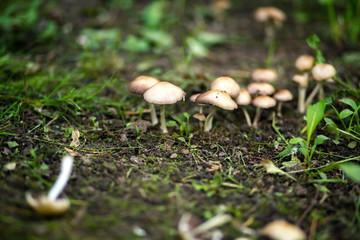 mushroom at tree