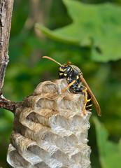 Small wasp 6