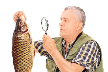 Mature fisherman examining a fish with magnifier