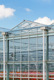Side view of a greenhouse with flowers inside