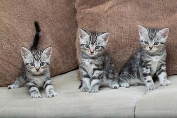 three kitten brothers