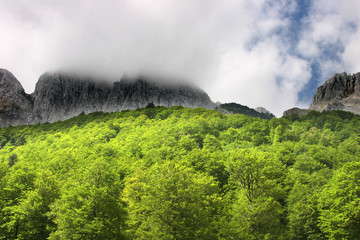 Bosque con montañas y nubes arriba