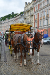 Horse vehicle for driving of tourists in Karlovy Vary, the Czech