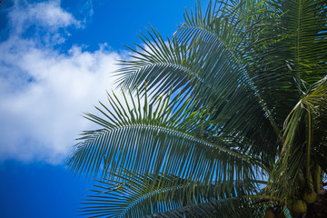 Coconut palm tree against blue sky. Thailand