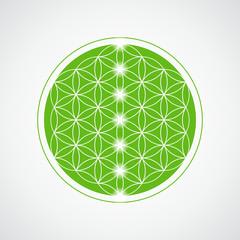blume des lebens grün