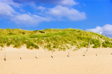 Dune over sand beach on North sea in Netherlands