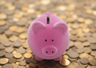 Pink piggy bank on coins