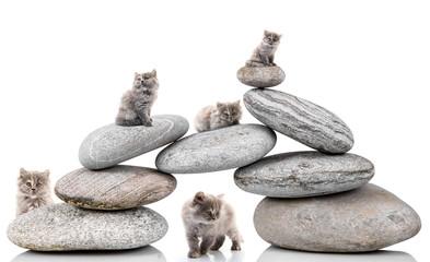 gattini sulle pietre