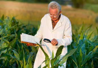 Agronomist in field