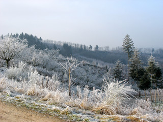 Woods and countryside during winter