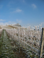 Vineyard and countryside during winter