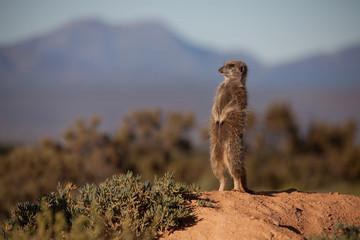 Meerkat Adventures