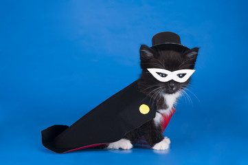 little kitten in a magician suit