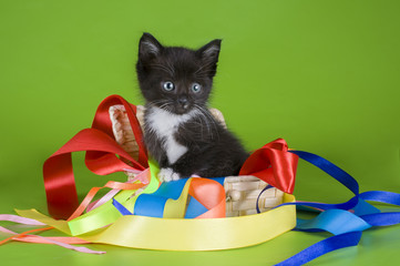little kitten playing in the colored ribbons