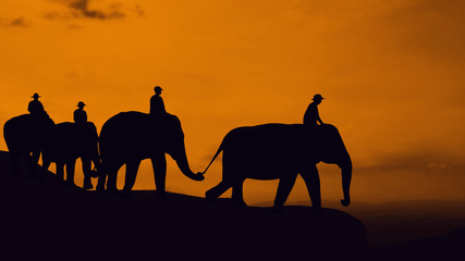 Elephant travel at mountain