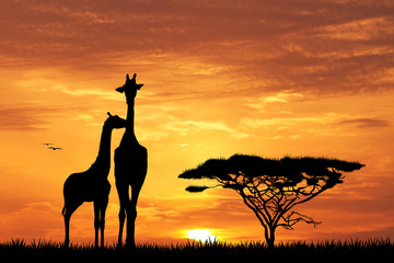 baby giraffe silhouette at sunset