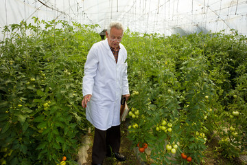 Agronomist in greenhouse