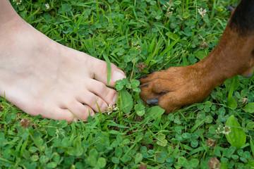 人間と犬の足