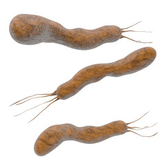 Helicobacter pylori - 3d Render