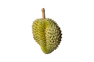durian king of  fruits on white background