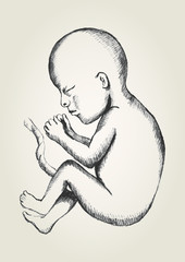 Sketch illustration of human fetus