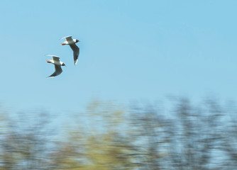 lake gulls, motion
