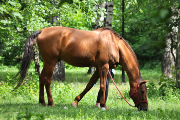 horse in a forest glade.