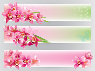 Horizontal banners with orchids