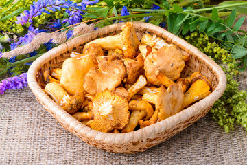 Chanterelles and Wildflowers