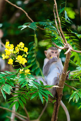 Little Monkey.  baby macaque