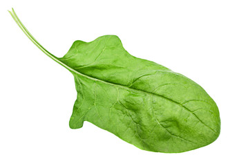 Spinach leaf
