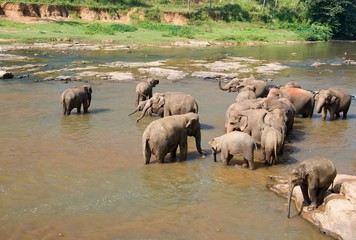 Elephants bath 4