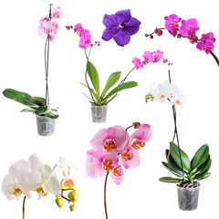 Collage of beautiful orchids isolated on white