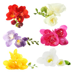 Collage of beautiful  freesias isolated on white