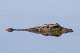 croc head poster