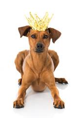 Hund mit Krone