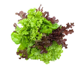 lettuce isolated on white background