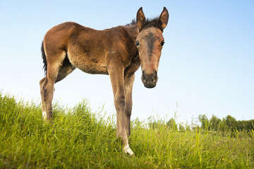 curious foal in green field
