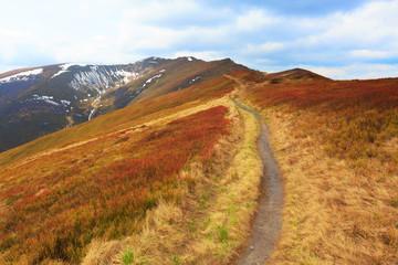 Pathway among nice meadow on mountain's slope