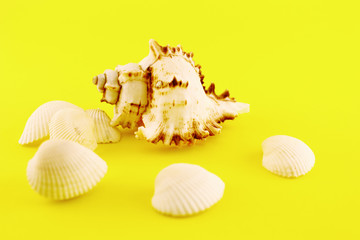 Whelk and seashells