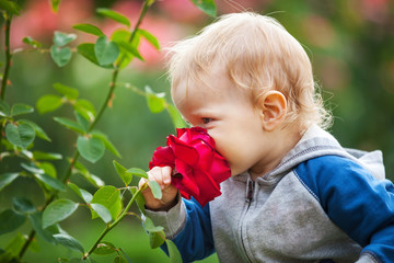 Cute small boy smelling red rose