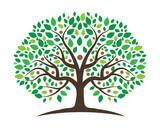 Fototapety Family Tree 5
