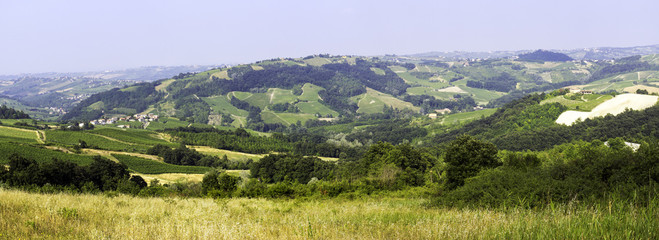 Vineyard panorama, Oltrepo Pavese. Color image