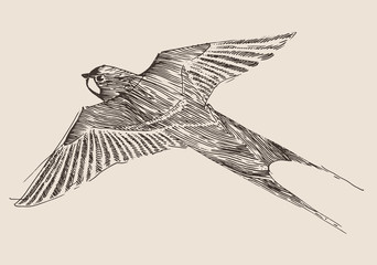 swallows flying bird vintage illustration, engraved style