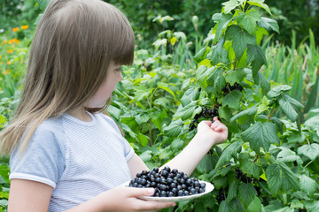 little girl near a bush currants