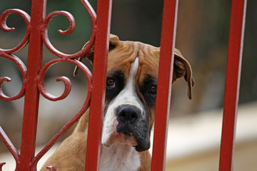 Boxer hinter Gittern