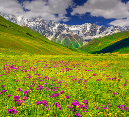 Beautiful view of alpine meadows in the Caucasus mountains.