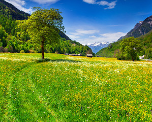 Alpine meadows near the village of Bondo. Alps, Switzerland.